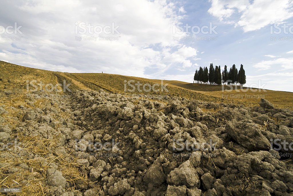 Plowed Field with cypresses stock photo