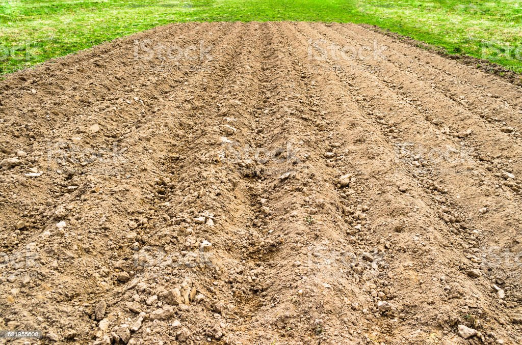 Plowed land field in a rural country setting, spring grass and fresh crops. stock photo