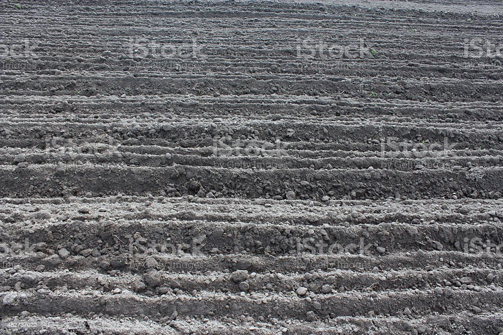 plowed land ready for planting potato in the village stock photo
