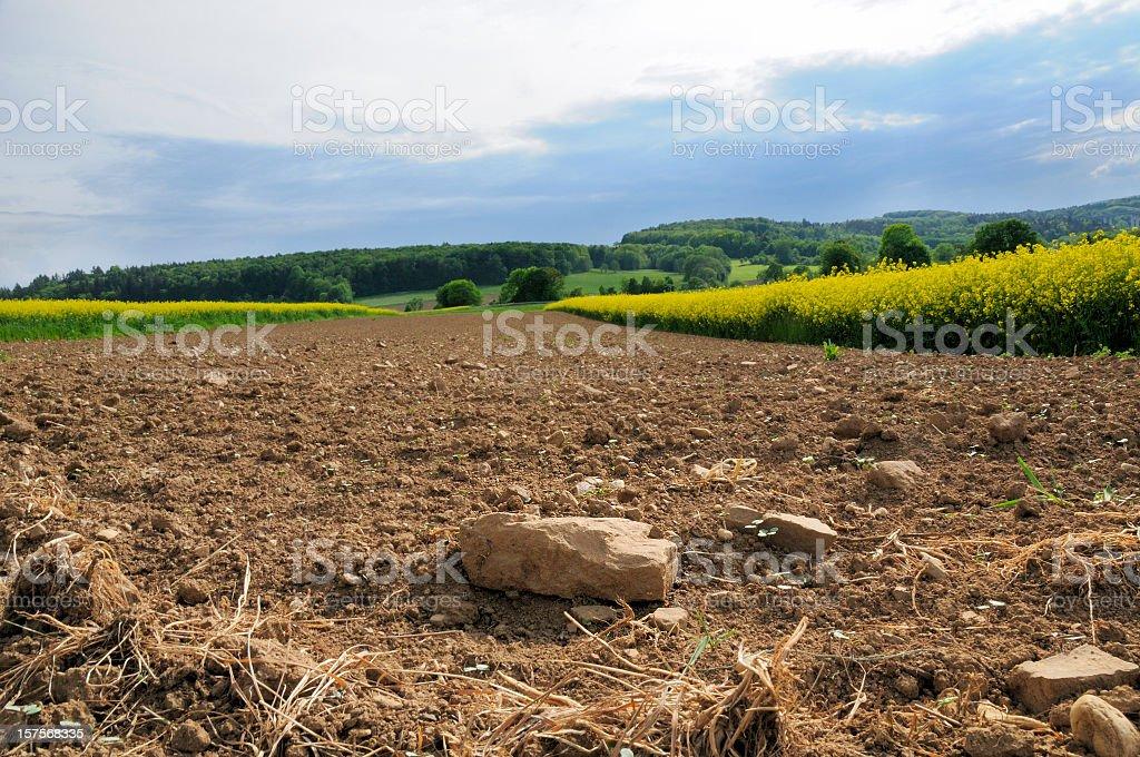Plowed rocky farmland between canola fields stock photo