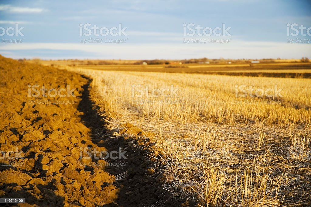 Plowed Terraces at Sunset royalty-free stock photo