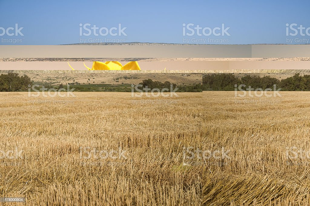 plowed wheat field at northen israel royalty-free stock photo