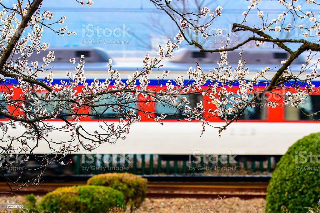 Kwiat śliwy, pociąg railroad zbiór zdjęć royalty-free