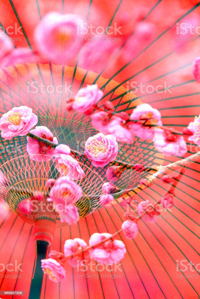 Plum flower and umbrella stock photo