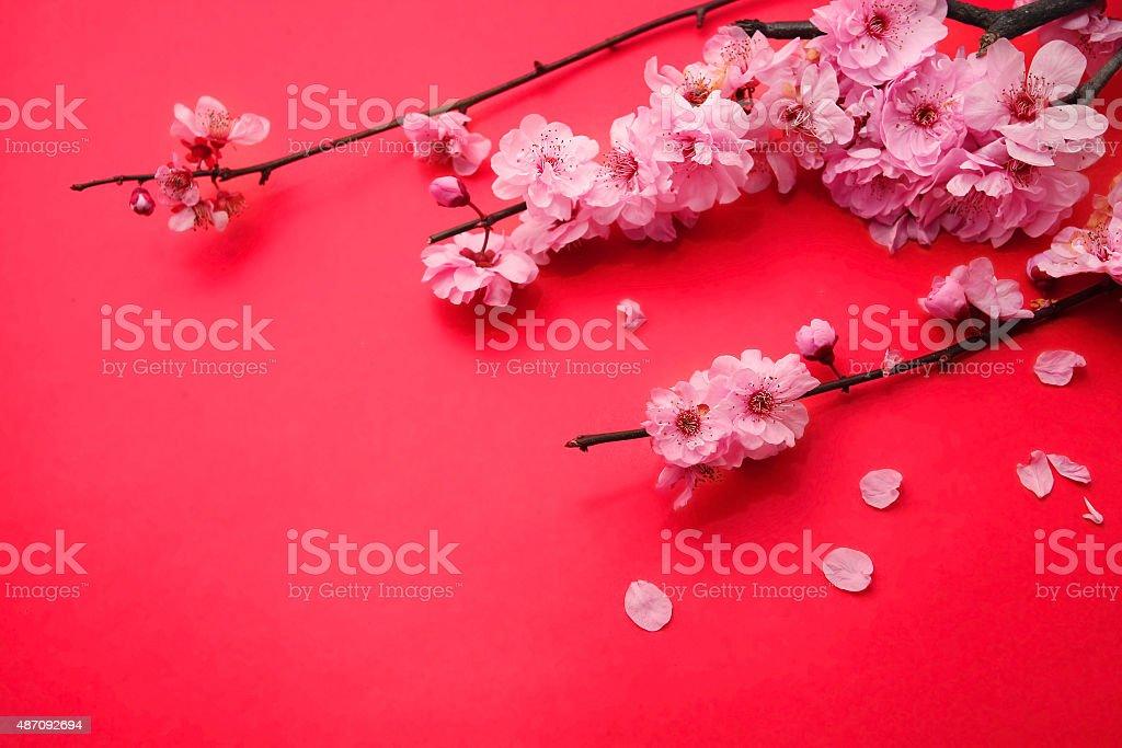 Plum Flowers or Cherry Blossom stock photo