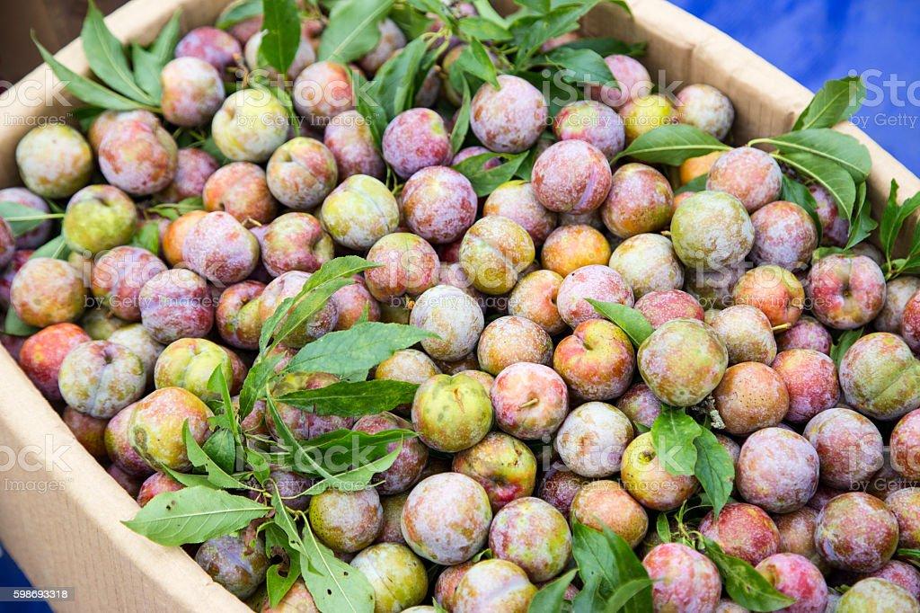 Plum fruits stock photo
