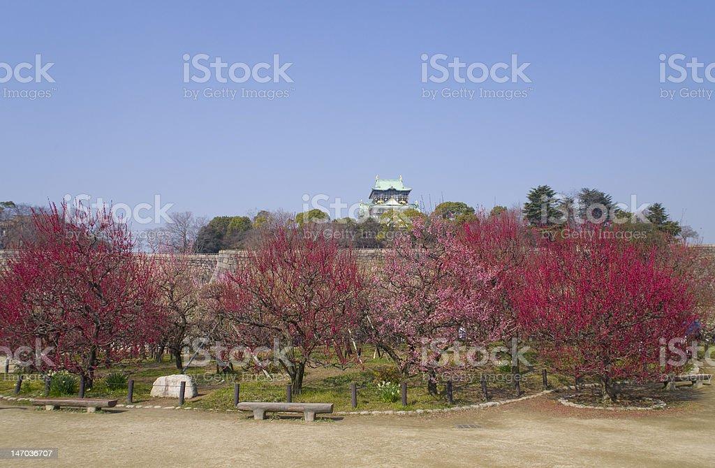 Plum grove in Osaka castle royalty-free stock photo