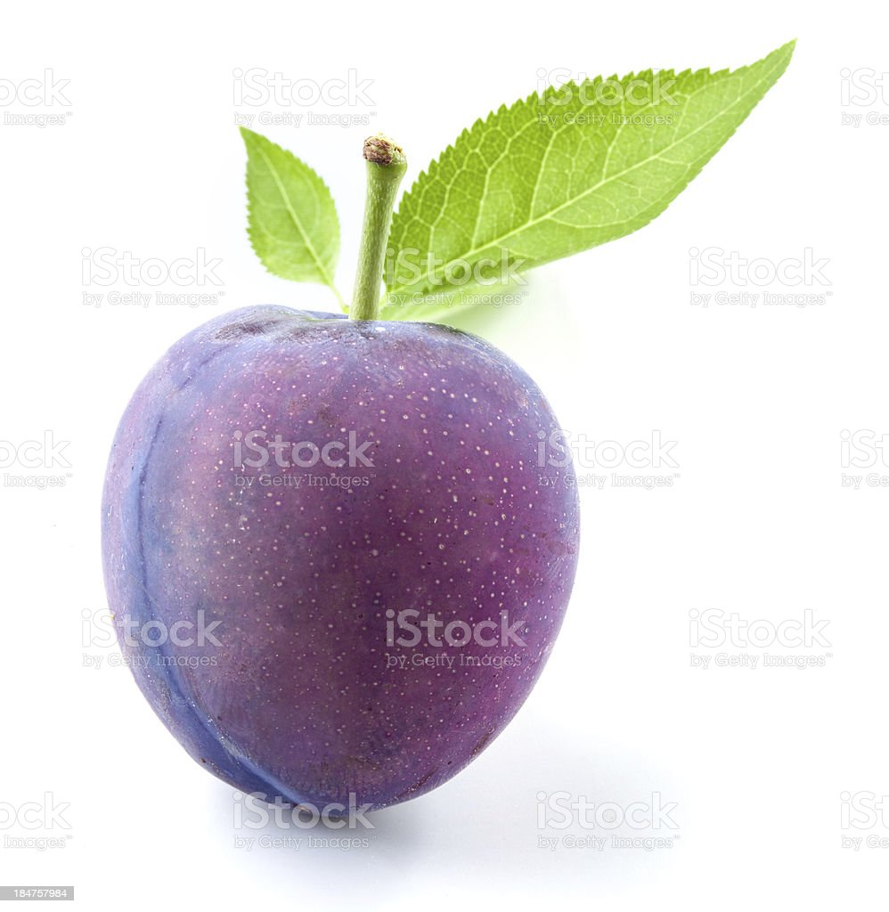 Plum isolated stock photo