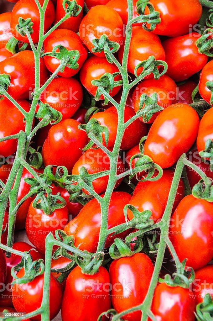 Plum Tomatoes on a Vine stock photo