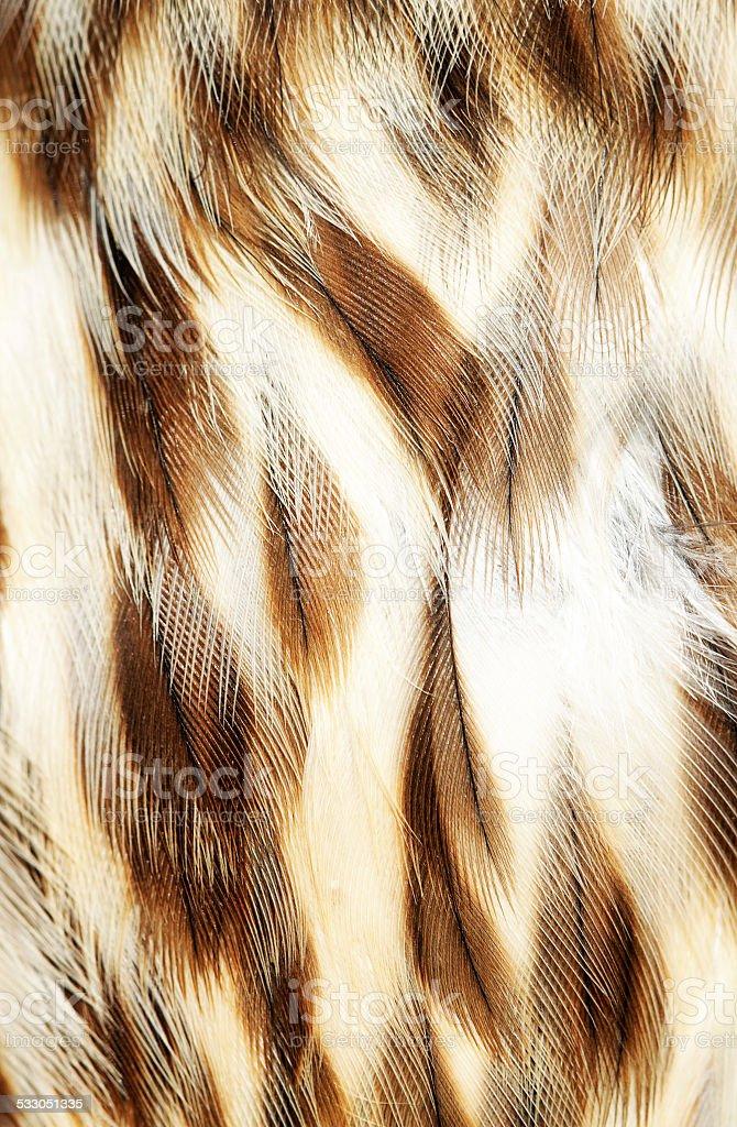 plumage background stock photo