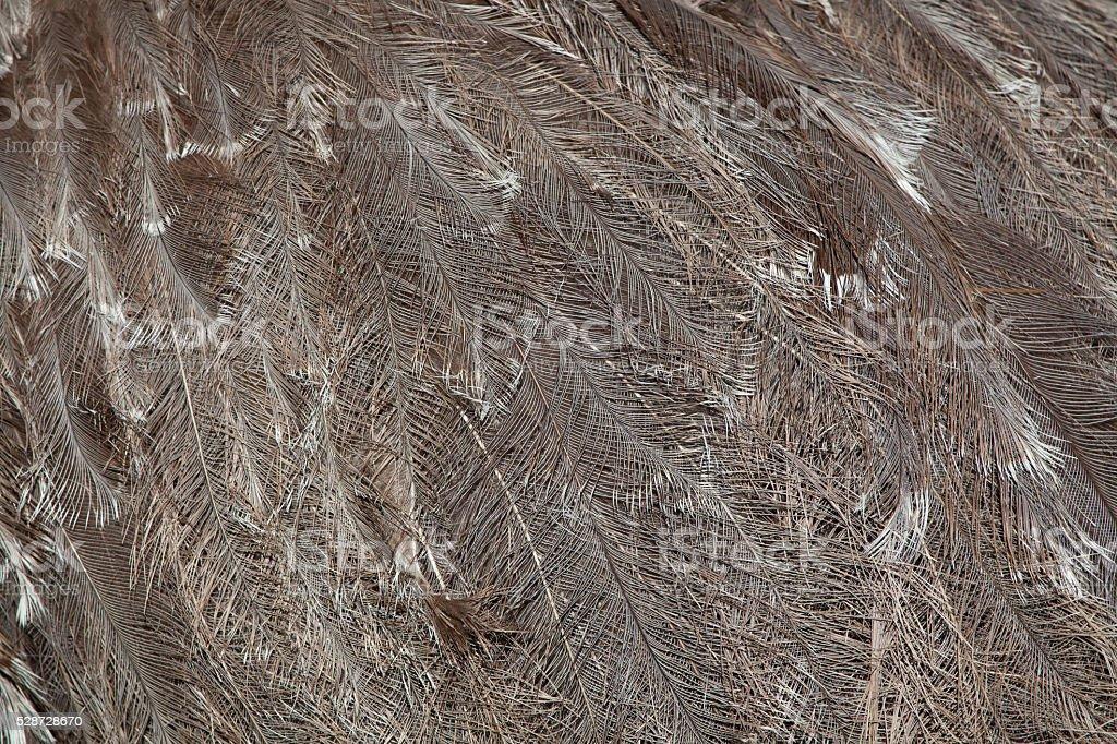 Plumage of the Darwin's rhea (Rhea pennata). stock photo