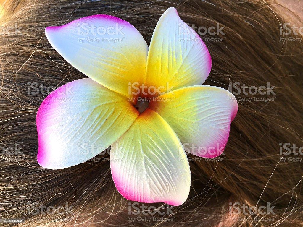 Plumaria in hair stock photo