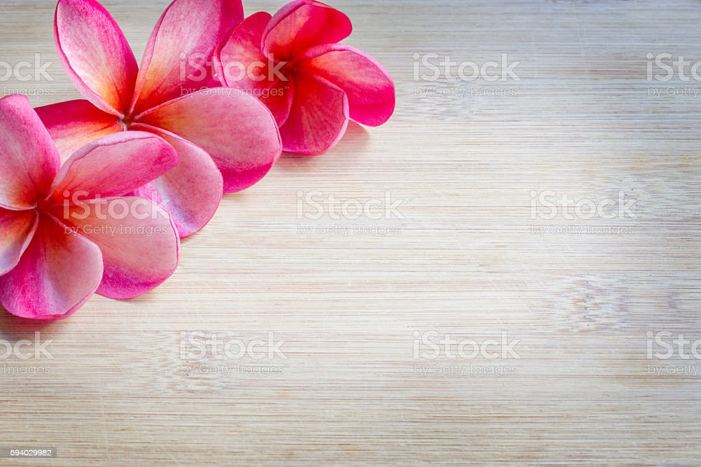 Plumeria Border Design on Bamboo Background stock photo