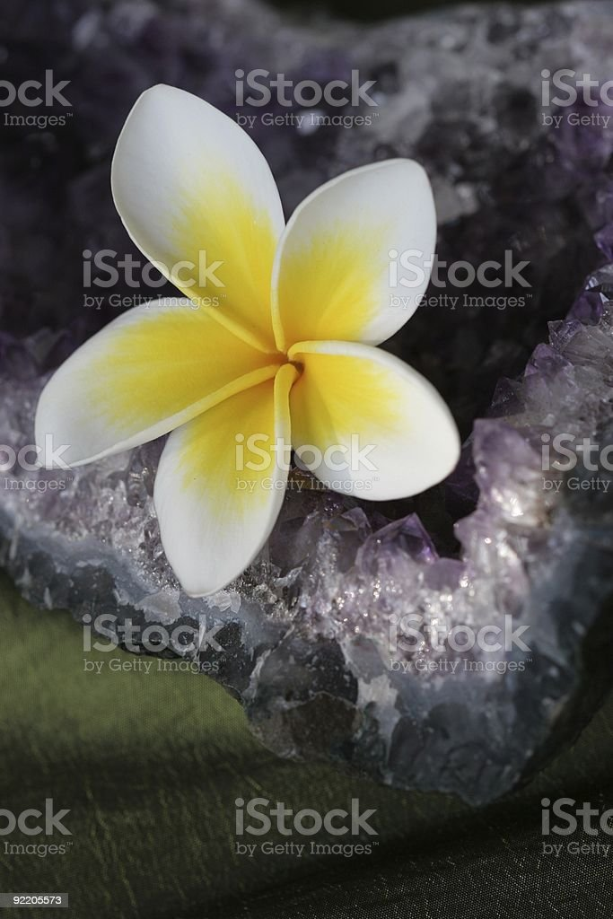 Plumeria Flower and Amethyst Crystal royalty-free stock photo