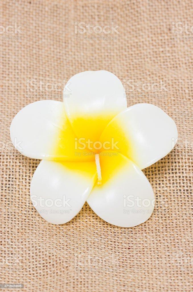 Plumeria flower candles. stock photo