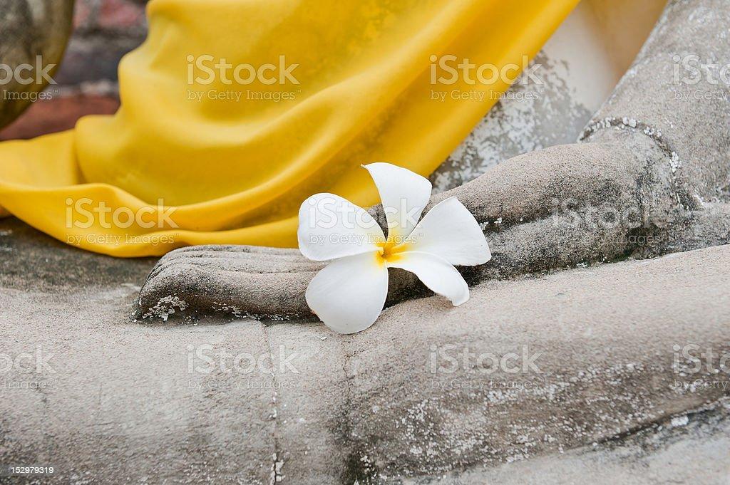 Plumeria flower on hand of buddha statue. royalty-free stock photo