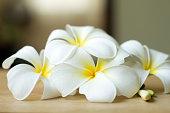 Plumeria flowers fresh or Frangipani tropical flowers on wood