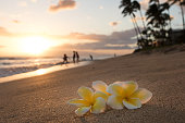 Plumeria flowers on the shore