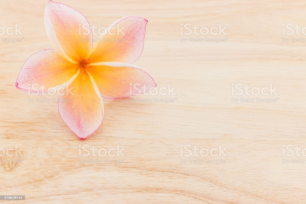 Plumeria flowers on wood stock photo