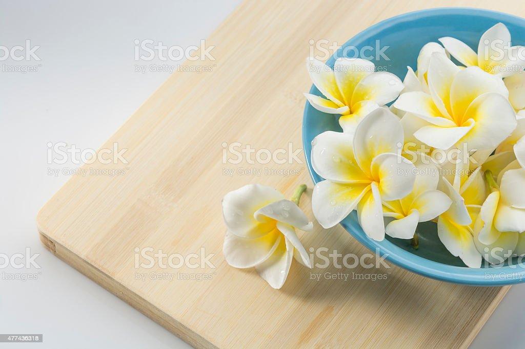Plumeria rubra stock photo