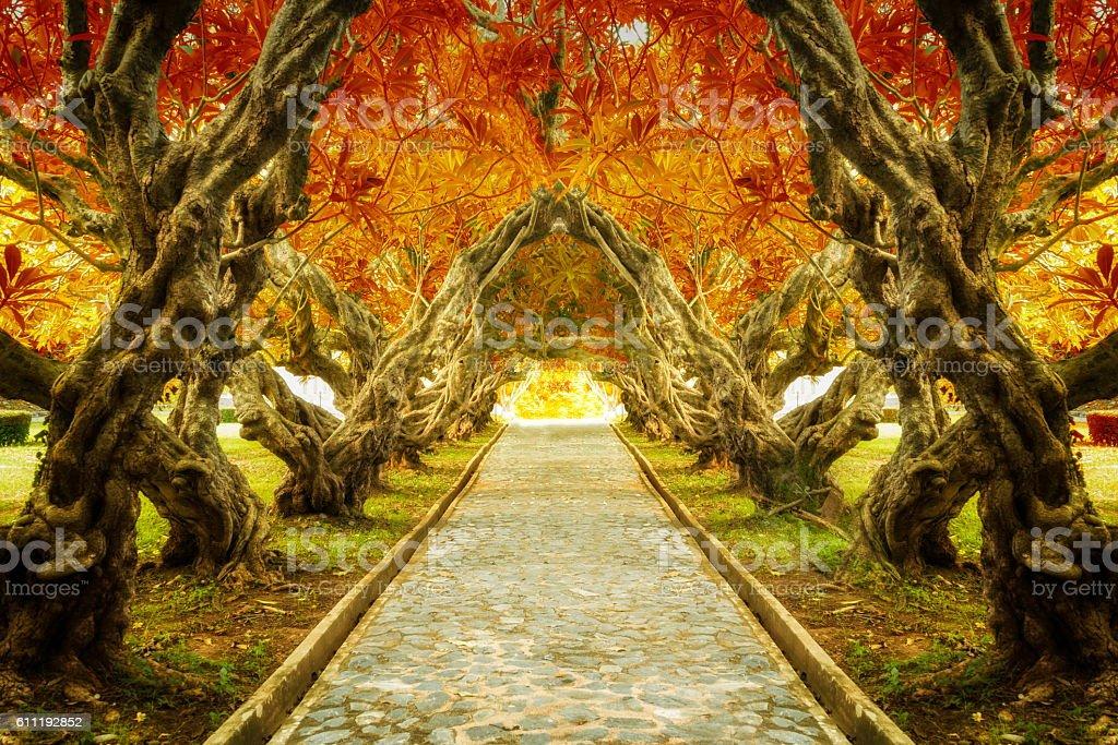 Plumeria tree tunnel stock photo