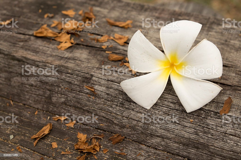 Plumeria with wood background. May use as background. royalty-free stock photo
