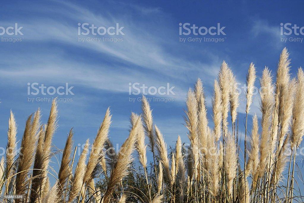 Plumerillos stock photo