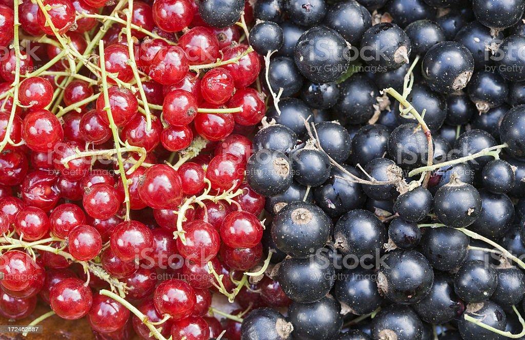 plump berries royalty-free stock photo