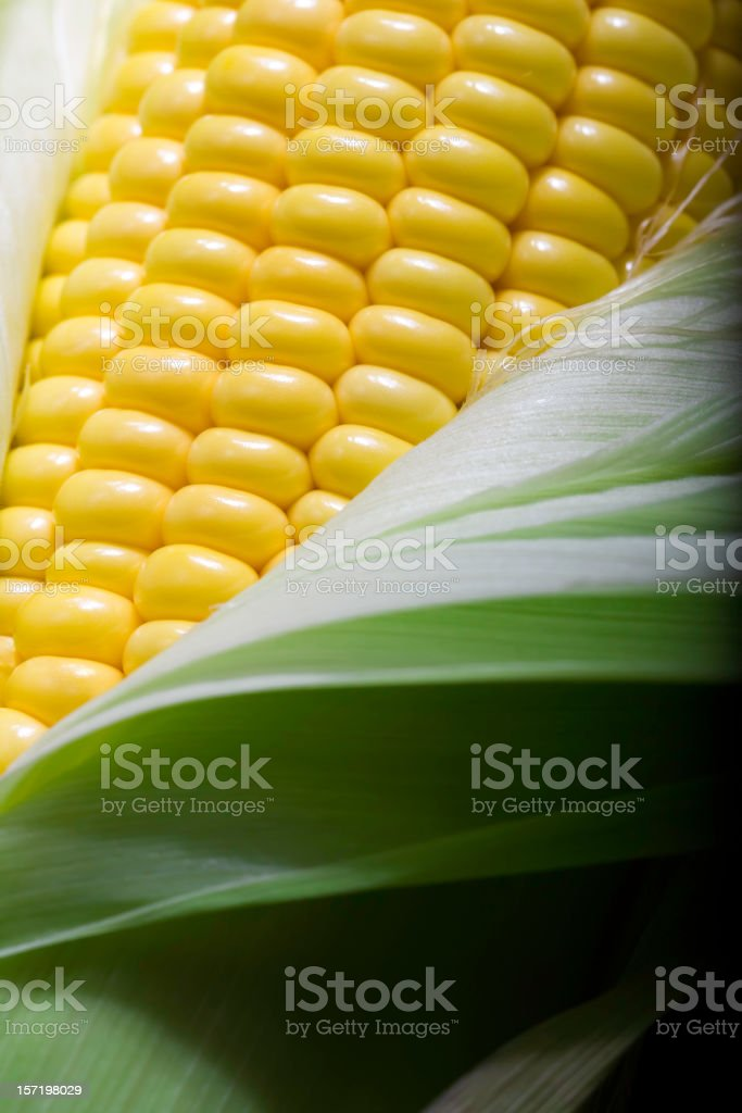 Plump Juicy Corn on the Cob royalty-free stock photo