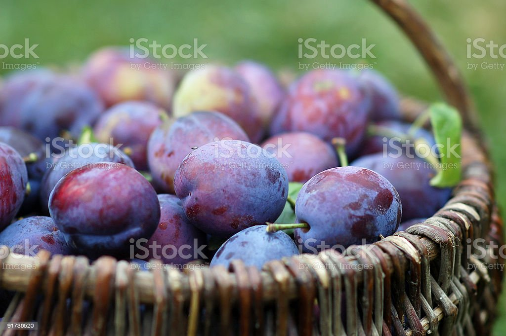 plums in the basket stock photo