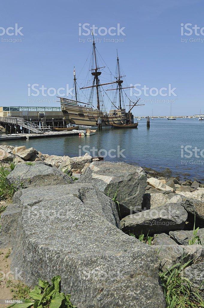 Plymouth Rocks stock photo
