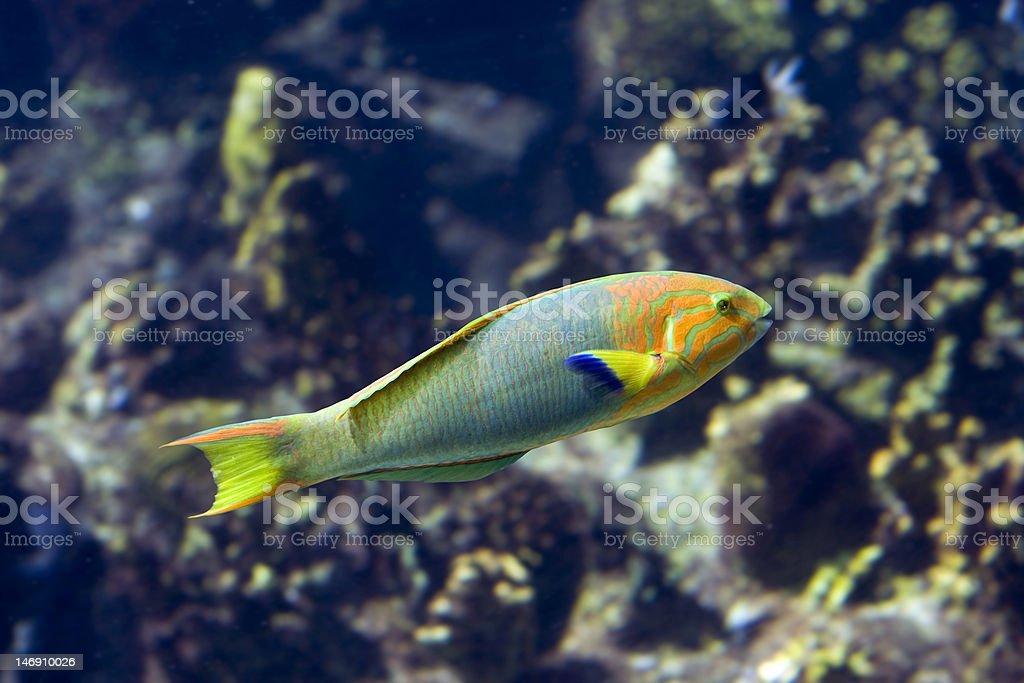 PoaFish stock photo