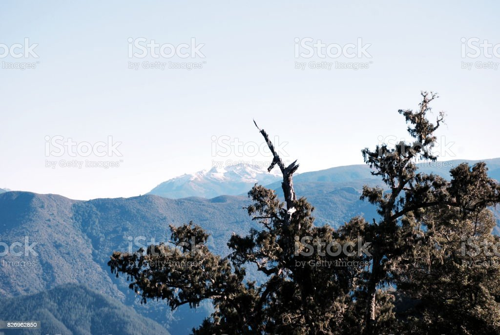 Podocarp and New Zealand Mountain-scape Rural Scene, Winter stock photo