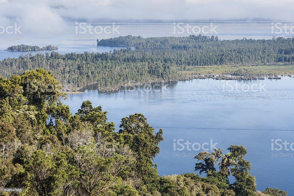 Podocarp forest at lake Brunner stock photo