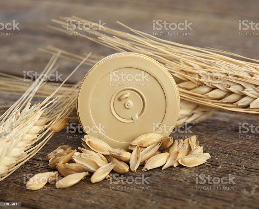Pods of barley royalty-free stock photo