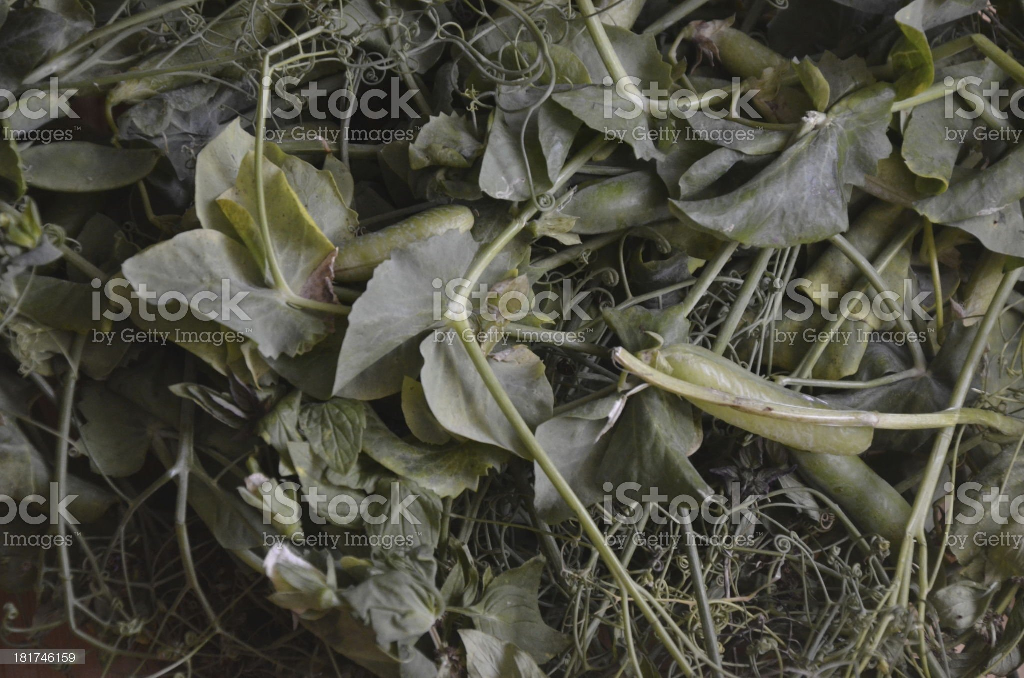 Pods of green pease royalty-free stock photo