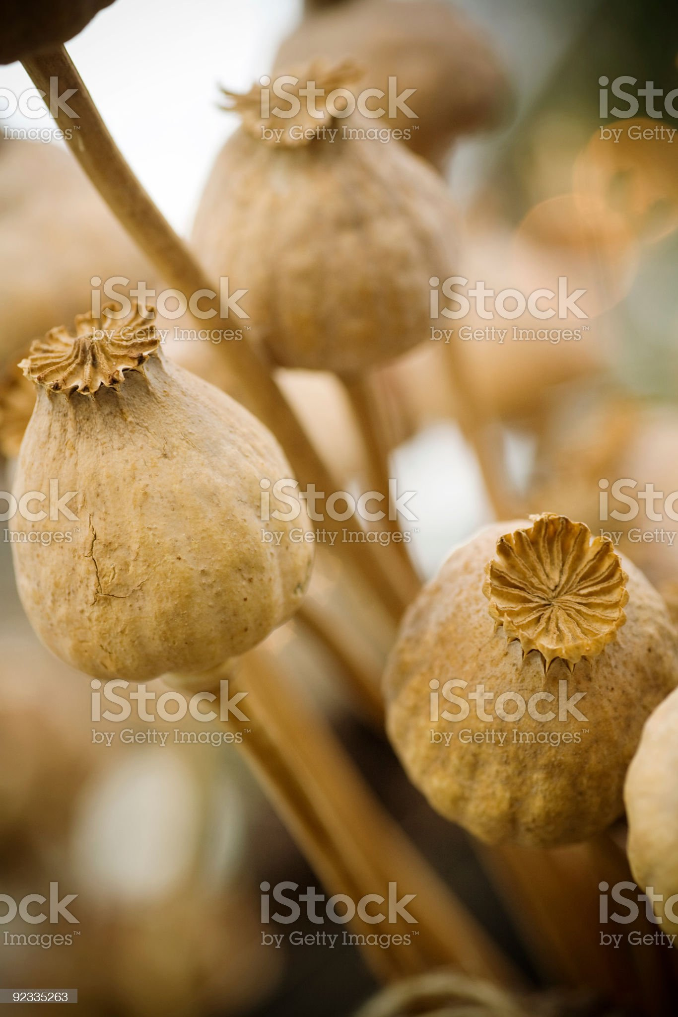 pods royalty-free stock photo