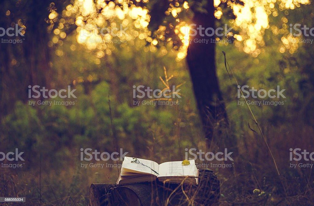 Poetry book under tree stock photo