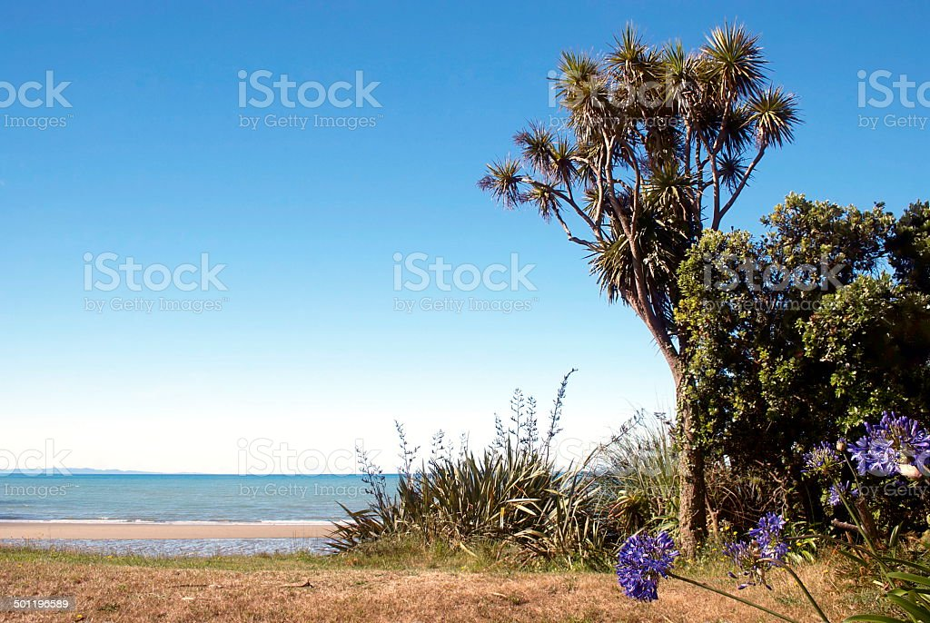 Pohara Seascape with Cabbage Tree & New Zealand Flax stock photo