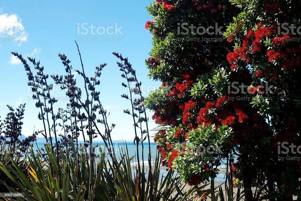 Pohutakawa and New Zealand Flax Seascape stock photo