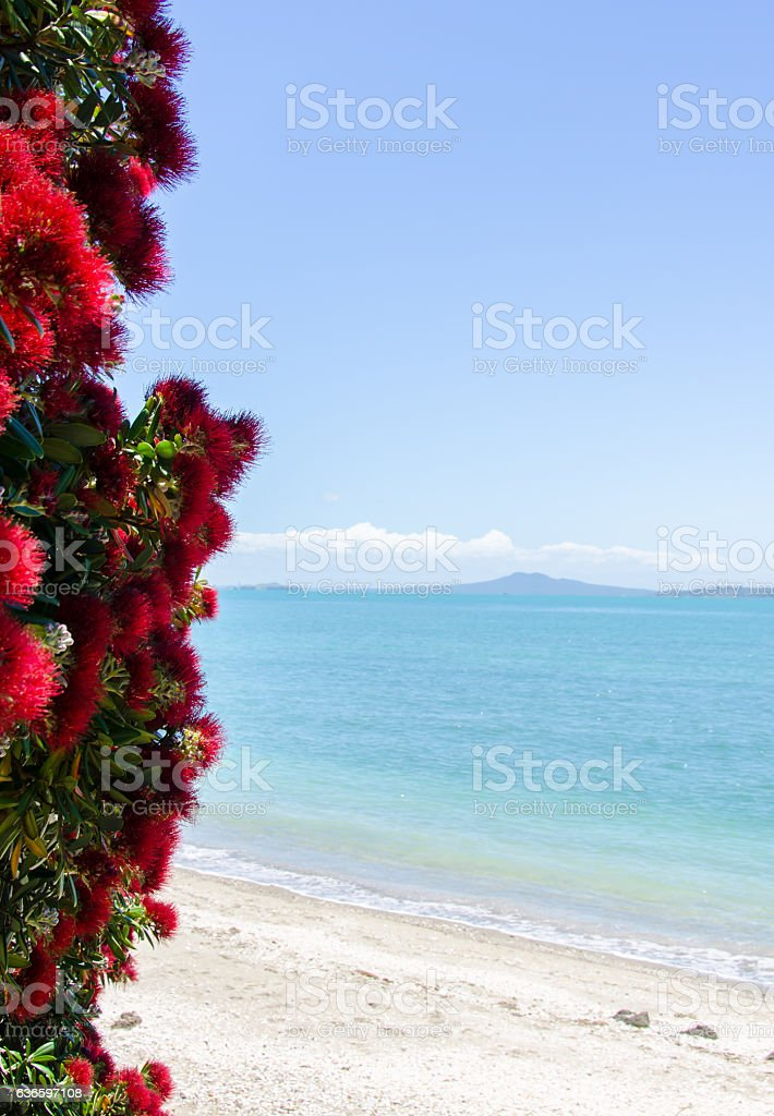 Pohutakawa with views of Rangitoto Island stock photo