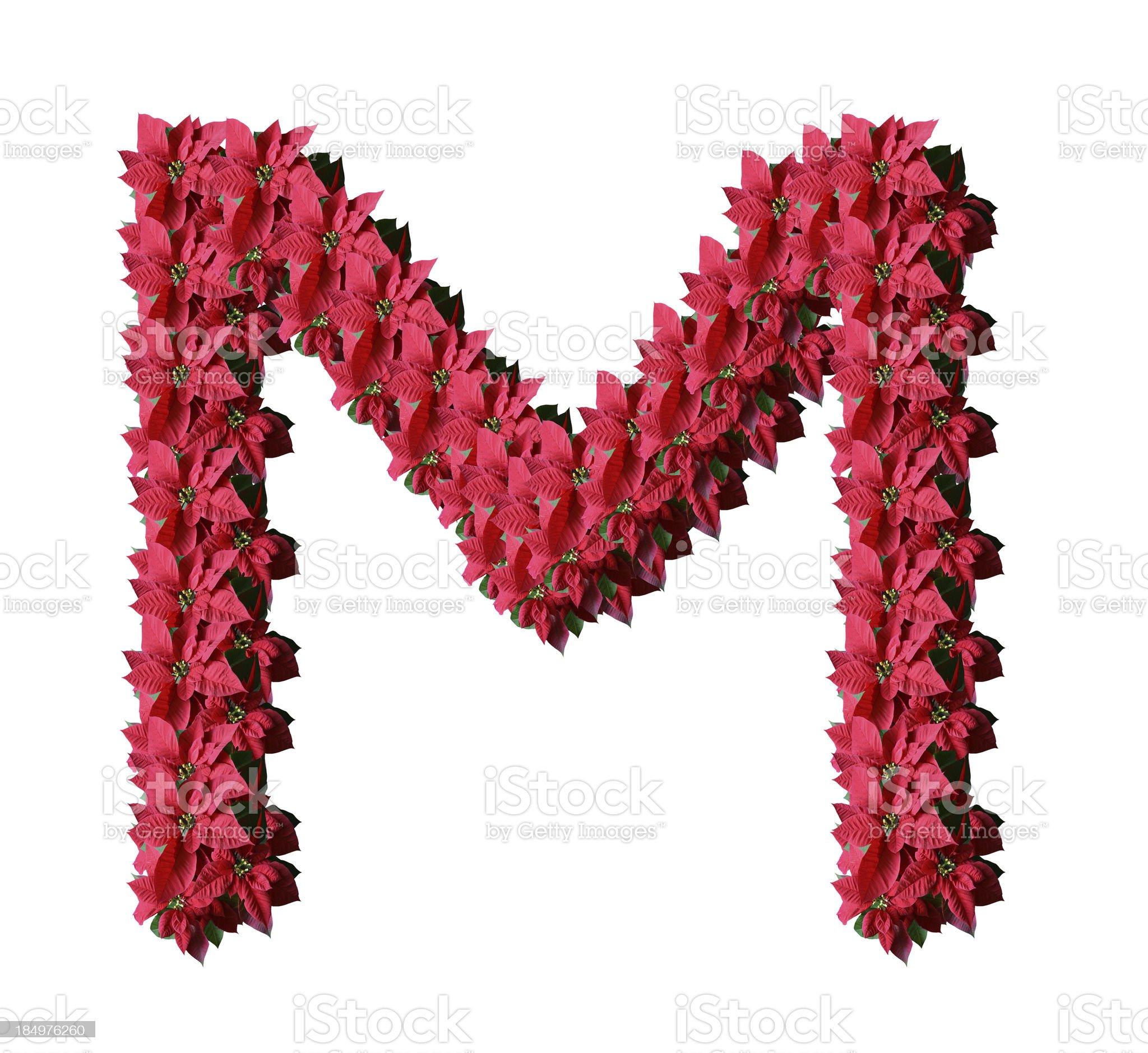 Poinsetia letter M royalty-free stock photo