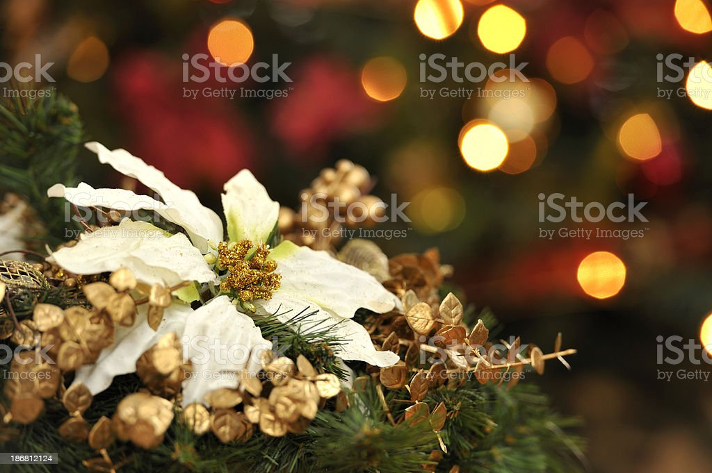 Poinsettia and Christmas Lights royalty-free stock photo