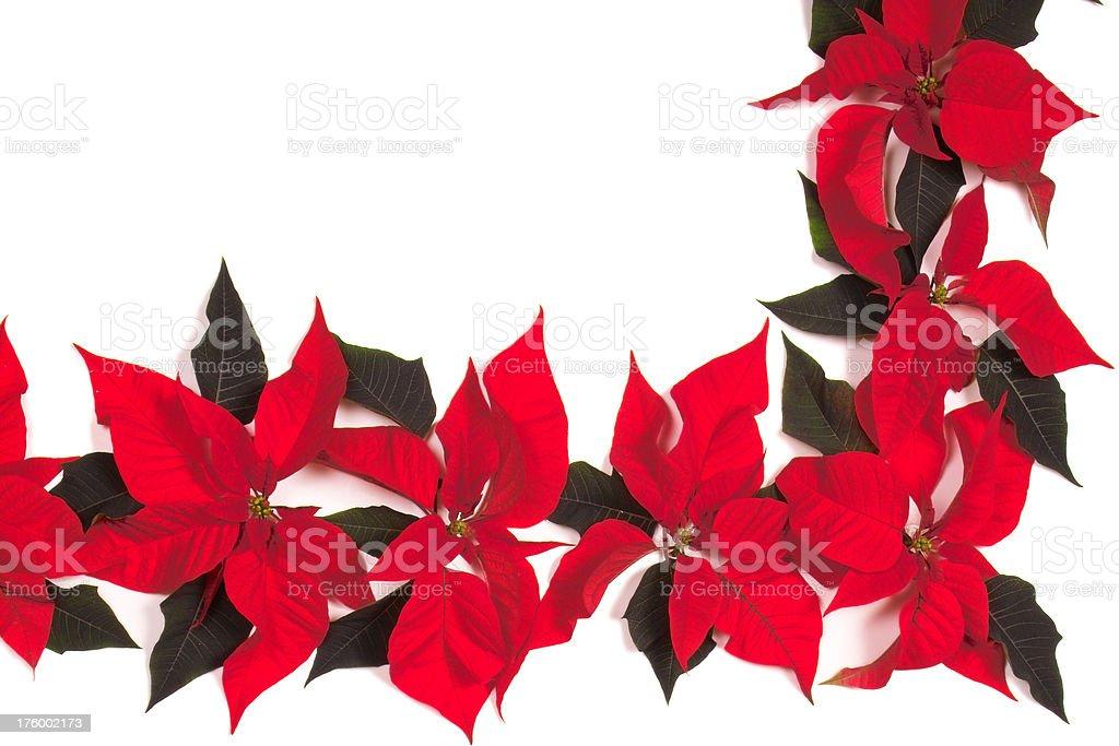 Poinsettia Corner royalty-free stock photo