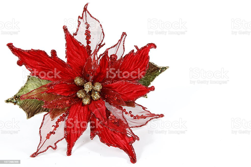 Poinsettia Decoration royalty-free stock photo