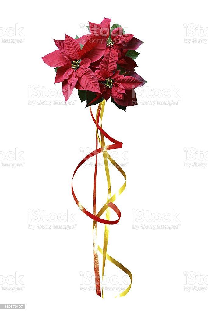 Poinsettia design royalty-free stock photo