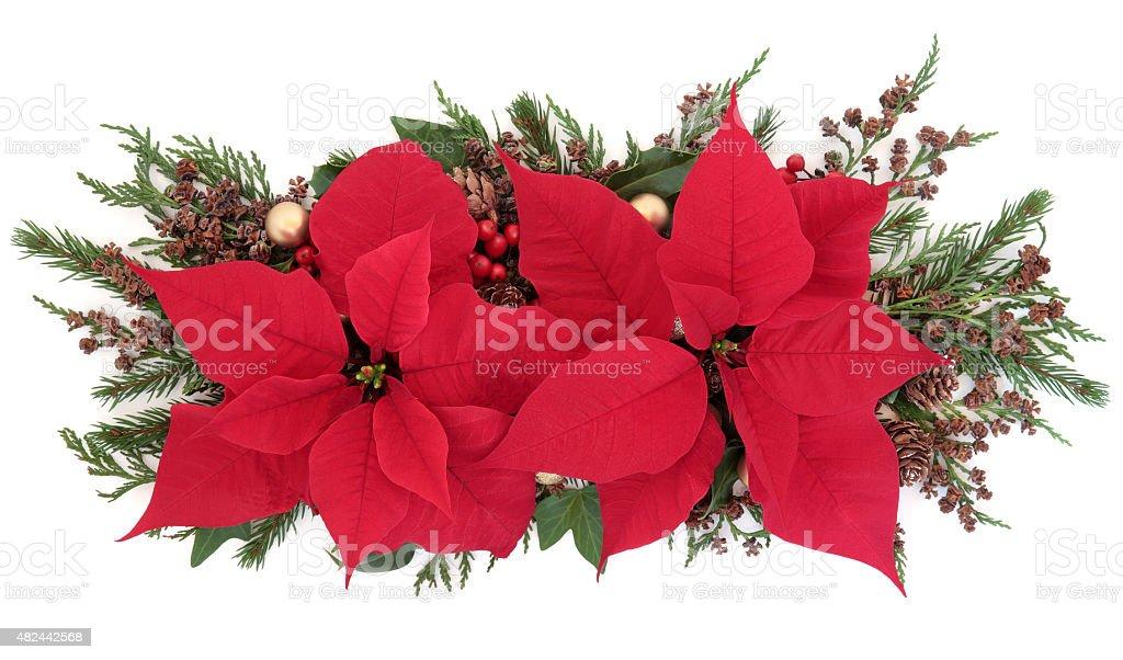 Poinsettia Flower Display stock photo