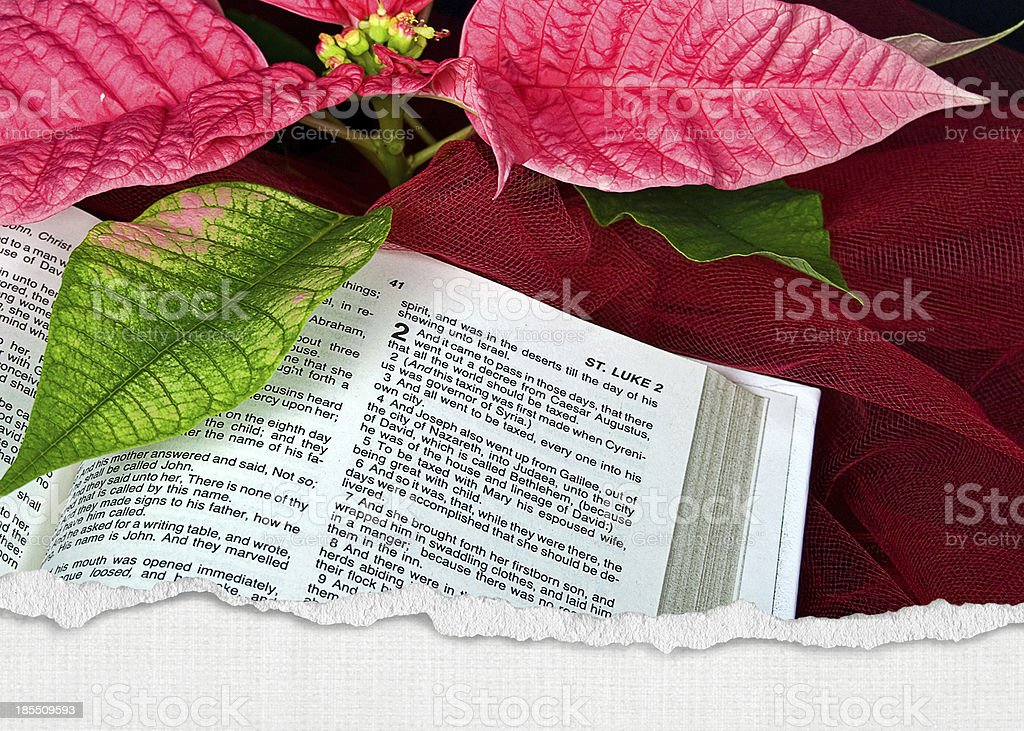 poinsettia flower on Holy Bible royalty-free stock photo