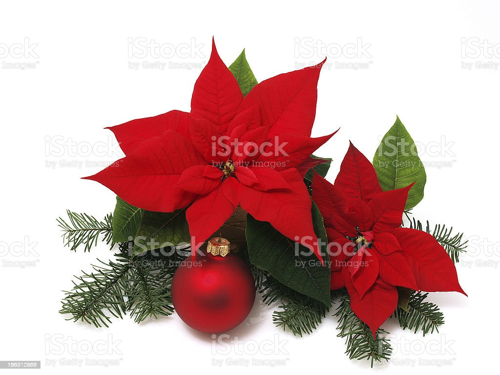 Poinsettia flower with pine branches and holiday ornament stock photo