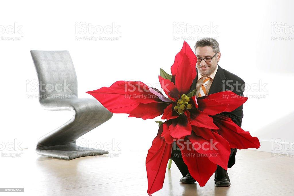 Poinsettia For You stock photo